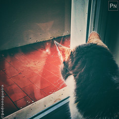 Reflections (Pedro Nogueira Photography) Tags: pedronogueiraphotography pedronogueira photography animal cat gato doméstico domestic kitty kittens pets pet mobilephone iphone5 telemóvel iphoneography kalika