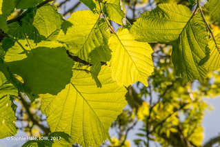 Highlighted Leaf Pattern