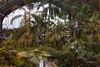 Estación de Atocha (michael_hamburg69) Tags: madrid comunidaddemadrid spanien es spain españa espagne palm palmen pflanzen bahnhof madridpuertadeatocha atocha bahnhofshalle palmengarten train station estacióndeatocha jardín railway railroad