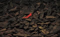 """la scarpa rossa..... (""""Mamo"""") Tags: scarpa rossa scarpe vecchio abbandonato triste ricordo"""