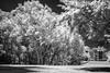 Costa del Este, Panama (Bernai Velarde-Light Seeker) Tags: costadeleste ir infrared urban parkpanama centralamerica trees building blackandwhite