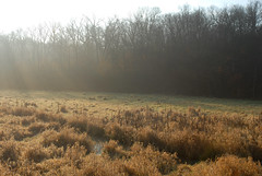 Morning Meadow (rdodson76) Tags: landscape missouri meadow field grass weeds water stream creek nature natural clean fresh sunshine rays lighting color morning dawn sunrise forest trees woods habitat environment climatechange weather fall winter seasons seasonal outside outdoors