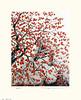 Japanese persimmon (Japanese Flower and Bird Art) Tags: flower persimmon diospyros kaki ebenaceae ryohei tanaka modern intaglio print japan japanese art readercollection