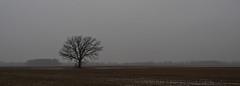 Rain (ramseybuckeye) Tags: winter rain rural country tree lone paulding county ohio pentax life fog mist gray