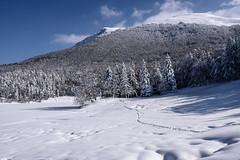 Monte Ventasso (Olmux82) Tags: monte ventasso italy italia reggio emilia romagna snow winter landscape nikon clouds d750 cloud sky blue mountain tree