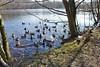 am Heider Bergsee (mama knipst!) Tags: schwan swan ente duck wasservogel bird