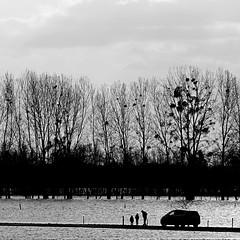 Briollay, Maine-et-Loire (pom.angers) Tags: panasonicdmctz101 car people sarthe briollay angers 49 maineetloire paysdelaloire france europeanunion february 2018 flood river beaugeois angersloiremétropole anjou trees 100 d109 200