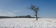 A sunny winter day outside of Dahenfeld 2. (andreasheinrich) Tags: landscape tree field forest winter february afternoon sunny cold germany badenwürttemberg neckarsulm dahenfeld deutschland landschaft baum feld wald februar nachmittag sonnig kalt nikond7000