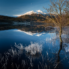 Ben Venue and Loch Achray (roseysnapper) Tags: ben venue loch achray nikkor 2470 f28 nikon d810 circular polarizer moon scotland trossachs calm frost frozen lake landscape mirror mountain outdoor peaceful reflection serene tranquil tree water winter squareformat snow grass sky
