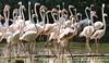 Jurong Bird Park, Singapore (rvk82) Tags: 2016 animalsbirds birds december december2016 jurongbirdpark nikkor200500mm nikon nikond500 rvk rvkphotography raghukumar raghukumarphotography singapore wildlife rvkonlinecom rvkphotographycom sg
