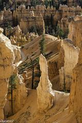 26092017-_IMG5155 (ducatst2) Tags: brycecanyonnationalpark ouestamericain2017 usa utah landscape montagne nature paysage pentax k3 flickrtravelaward tree park lr ngc