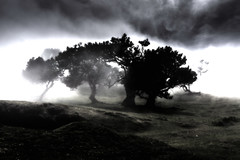 Into the Mystic (*Capture the Moment*) Tags: 2017 fog insel island laurel lorbeer madeira mist nebel pauldaserralowlands sonye18200mmoss sonynex7 wetter wolkenclouds foggy