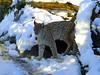 Einar, le lynx (Raymonde Contensous) Tags: lynx félin nature parczoologiquedeparis zoodevincennes pzp lynxboréal lynxdeurope félidé