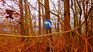 Abandoned Street Sign In The Forest