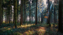In the forest (Parchman Kid (Jerry)) Tags: in forest this morning sun sunshine parchmankid sony a6500 18105mm landscape woods trees winter ilce6500 e pz f4 g oss rheinlandpfalz