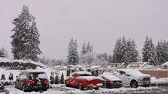 Oliver (san_sci) Tags: oliver winter storm arlington washington white contrast cold blizzard