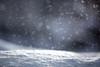 Let it snow (mpakarlsson) Tags: winter light sun bokeh snowflake outdoor white sunset sweden cold canon 70200 llens 28 5dmark3 5dmarkiii 5diii 5dm3