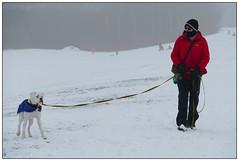 Snow Dog (donbyatt) Tags: winter snow miltonkeynes furztonlake people candid dog whitebulldog