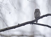 A Grey Day (ove ferling) Tags: birds nature wildlife owl eyes yellow grey setting west sweden