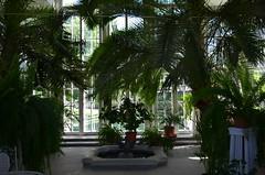 Palmse (anuwintschalek) Tags: nikond7000 d7k 18140vr eesti estland estonia suvi sommer july 2017 palmse palmsemõis mõis mõisasüda gutshof lahemaa lahemaarahvuspark lahemaanationalpark kasvuhoone palmimaja orangerie treibhaus palm palme palmid
