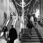 nocturnal steps 01 thumbnail