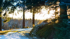 the bend in the road (grahamrobb888) Tags: nikon nikond800 d800 nikkor afnikkor80200mm128ed cokin gradnd graduatedfilter gradblue birnamwood bright woods winter trees forest footpath sun sunny light lightandshadow perthshire w