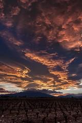 Strong wind + mountains range = Lenticularis. Lenticularis + sunset= Fire Sky (BadGunman) Tags: southoffrance france pyrenees mountain fire clouds sky sun landscape vineyard canon pyreneesorientales languedocroussillon occitanie perpignan lenticularis sunset