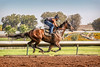 Los Alamitos Race Track 9.10.16 12 (Marcie Gonzalez) Tags: racehorse racehorses race horse horses track racing racer ride rider sport event movement motion fast run running round southern california calif ca usa us north america sports practice training los alamitos
