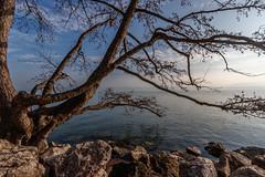 Matin de brume - Lac du Bourget - Savoie (gerardcarron) Tags: 1022 arbres calme canon80d ciel eau hiver lac lacbourget lake landscape matin morning nature paysage savoie sky water winter