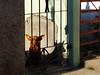 yodadog (DMeryl Photography) Tags: cuba havana mantazas puertoesperanza buildings cars landscape documentary street portrait photography dmeryl experientexplorer colorful bw travel tourism people animals