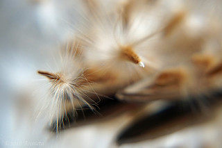 Seed macro