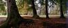 In the park (elkarrde) Tags: trees park shadow shade autumn fall leaves deadleaves jastrebarsko croatia landscape nature panoramic swinglens horizon202 camera:brand=kmz camera:model=horizon202 kmz lens:brand=kmz lens:model=mc2828 lens:focallength=28mm lens:maxaperture=28 agfavista200 agfaphoto film:brand=agfaphoto film:model=vista200 film:format=135 camera:format=135 film:basesensitivity=200asa film:process=c41 c41 colornegativefilm filmisnotdead filmisalive scanner:brand=plustek scanner:model=opticfilm8100 analoguephotography analogphotography filmphotography analogue film plustek opticfilm8100 plustekopticfilm8100 vuescanx6495 erdödypark erdödy location:country=croatia location:city=jastrebarsko jastrebarskocounty jaska 2017 autumn2017 october2017 october twop