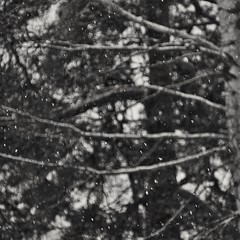 Snowing (Stefano Rugolo) Tags: stefanorugolo pentax k5 pentaxk5 vivitar80200mmf4macrofocusingzoommc abstract monochrome snowing impression bokeh blur motion depthoffield dynamism tree forest sky hälsingland sweden sverige