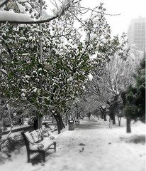 cpt_1517139215487بلوار کشاورز (afs.harp) Tags: snow tehran iran color b black white focus beautiful
