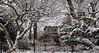 A Winter Wonderland (CVerwaal) Tags: belvederecastle centralpark snow winter trees olympusem5 lumixgvario1235mmf28