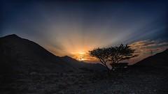 Life on the Rocks (Sanjiban2011) Tags: khorfakkan uae abudhabi sunrise sunrays dawn earlymorning tree singletree landscape nature mountains outdoor sky nikon d750 fullframe tamron tamron1530 travel