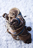 Permafrost. (Dave/Skrímsli) Tags: wow world warcraft blizzard kaluak morse hunter inuit norfendre northrend ice snow wrath licht king wotlk tuskarr