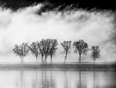 Trees Shrouded in Fog (Bernie Kasper (3 million views)) Tags: art berniekasper bw creek d600 family fog hiking history historic indiana jeffersoncounty kentucky light landscape love madisonindiana madison outdoors outdoor old outside ohioriver photography park nature nikon naturephotography new silhoutte reflection firefighters raw river sky weather tree trees