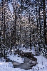 Bigelow Hollow State Park (billandkent) Tags: 2018 bigelowhollowstatepark billcannon connecticut mashapaug union unionconnecticut billandkent snow winter
