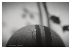 Little planet (GP Camera) Tags: nikond80 nikonaf50mmf18d macro macrotubes tubomacro macrophoto fotomacro curve curva dream sogno planet pianeta wood legno soft soffice abstract astratto ethereal etereo softtones tonisoffici focus messaafuoco bokeh sfocato vignetting light luce shadows ombre lightandshadows lucieombre softbackground sfondosoffice shades sfumature details dettagli textures trame depthoffield profonditàdicampo bw biancoenero monochrome monocromo cornicebianca darktable gimp opensource freesoftware softwarelibero digitalprocessing elaborazionedigitale