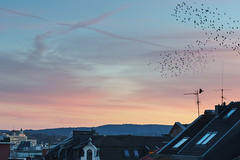 Night Flight (1durch0) Tags: aachen birds germany city flight sunset roof sky sonnenuntergang ptice dramatic color