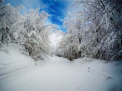 Surrounded by white (david_entertainment) Tags: italia italy inverno winter sky white blue forest foresta neve montagna snow mountain