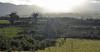 Ballybannan/Ballybannon (conall..) Tags: ballybannan ballybannon orchard mournes misty haze mountains intothesun rough scrubby gorse ground
