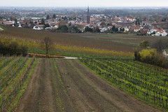 Leinhöhle (dese) Tags: deidesheim november21 2017 november tyskland germany pfalz haust