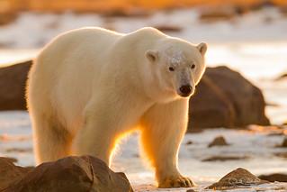Sunshine Bear  3384