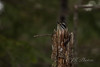 Peek-a-Boo (21orion) Tags: pecker hairy