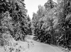 Winter (bjorbrei) Tags: winter frost snow forest trees skitrail skitrack kjelsås lillomarka marka oslo norway