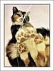 An ordinary cat (Bob R.L. Evans) Tags: littledoglaughednoiret pov composition feline catfeet paws humor ipadphotography glasstable