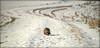 Happy Sunday! Wünsche allen einen schönen Sonntag.... (Renata1109) Tags: schnee landschaft katze sonntag sonne weg outdoor natur freizeit heimat bayern deutschland tier cat snow spaziergang germany sunday