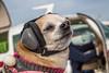 Flyin Sam's Jan 2017 (67) (Feddal Nora) Tags: flying flyingsamaritans flyingdoctors doctor dentalclinic free clinic mexico medecins dentist volunteer airplane jesusmaria